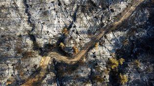 Une forêt brûlée sur l'île d'Eubéeen Grèce, le 10 août 2021. (MICHAEL VARAKLAS / AP)