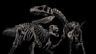 Le squelette d'un allosaurus à gauche et un squelette de camptosaurus  (Artcurial)