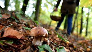 Un cueilleur de champignons en Dordogne le 16 octobre 2020. (STEPHANIE PARA / PHOTOPQR / LA MONTAGNE / MAXPPP)