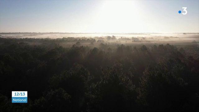 Landes : les pommes de pins maritimes, trésor de la Nouvelle-Aquitaine