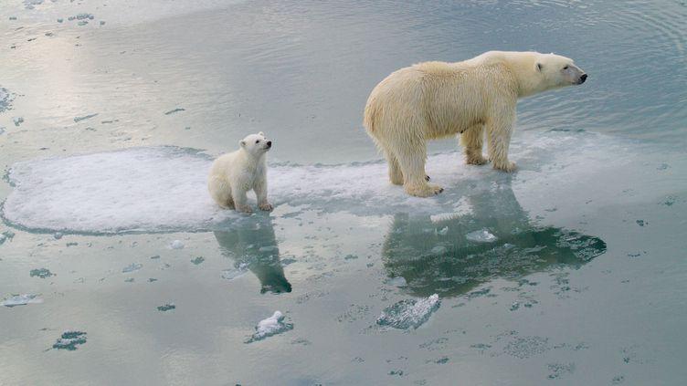Un ours polaire et sa progéniture, près deSvalbard (Norvège), en 2012. (KT MILLER / POLAR BEARS INTERNATIONAL / AFP)