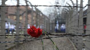 Une fleur sur un barbelé du camp d'Auschwitz en Pologne. (JANEK SKARZYNSKI / AFP)