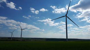 Des éoliennes en Côte-d'Or. Photo d'illustration. (OLIVIER ESTRAN / FRANCE-BLEU BOURGOGNE / RADIO FRANCE)
