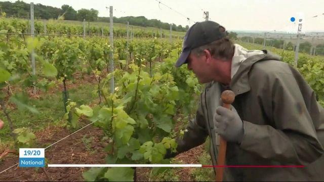 Déconfinement : la route des vins en difficulté