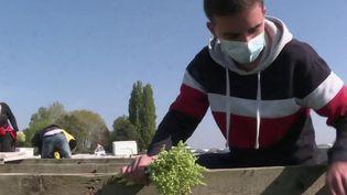 1er mai : les étudiants en difficultés misent sur la cueillette du muguet (FRANCE 2)