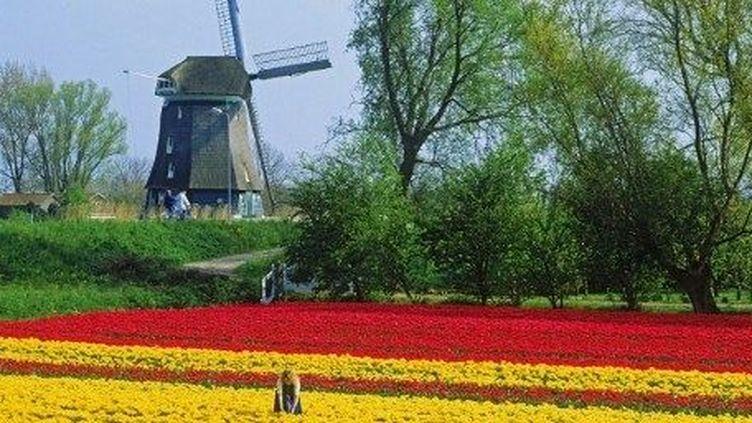 La croissance est dans le rouge au pays des tulipes. (Chad Ehlers / TIPS / Photononstop)
