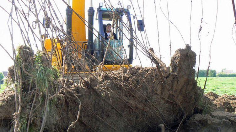Vestiges d'une piste aérienne en cours de dégagement lors de fouilles en 2011 à Bretteville-l'Orgueilleuse (Calvados). Cette piste a été installée par les Britanniques du 16 juin au 30 août 1944, juste après le débarquement de Normandie. Grâce aux éléments préfabriqués qui le composaient, les sapeurs du Génie pouvaient installer ce genre d'équipement en moins de 24 heures.  (Chris-Cécile Besnard-Vauterin, Inrap )