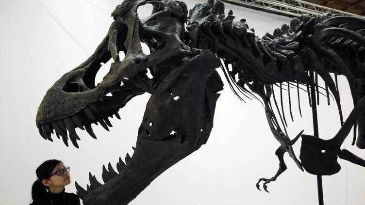 Un squelette de Tyrannosaurusrex exposé au National Chiang Kai-Shek Memorial Hall, à Taipei (Taïwan), le 7 décembre 2009. (NICKY LOH / REUTERS)