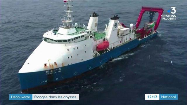 Science : plongée dans la Fosse des Mariannes