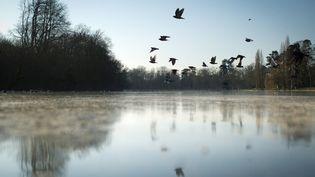 Le lac du Bois de Vincennes, à Paris, le 3 février 2012. (MARTIN BUREAU / AFP)