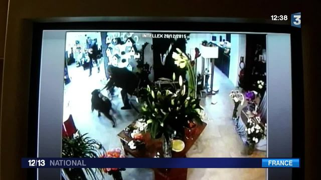 Un sanglier fait irruption dans la boutique d'une fleuriste