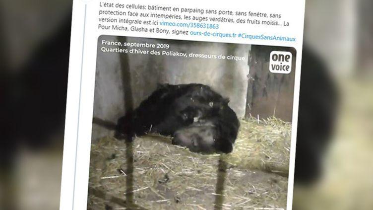 Plusieurs ONG avaient alerté sur l'état de santé de l'ours. (CAPTURE ECRAN / ONE VOICE)
