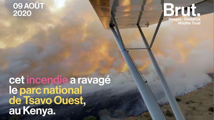 VIDEO. Au Kenya, le parc de Tsavo ravagé par les flammes (BRUT)