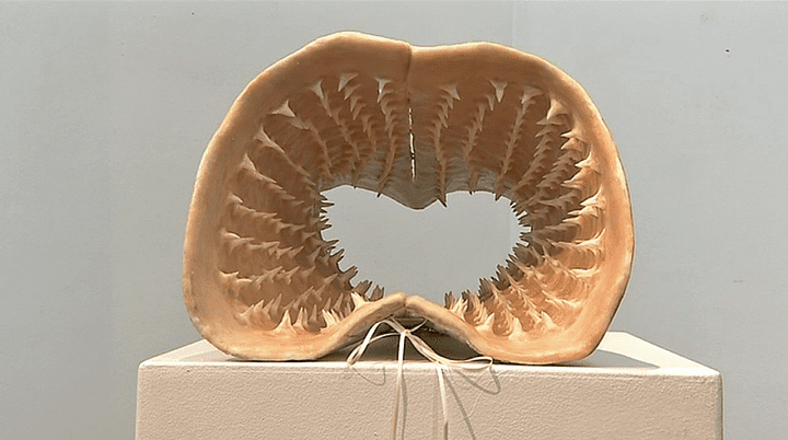 Le corset en dents de requin par Sarah Garzoni  (France 3 / Culturebox)