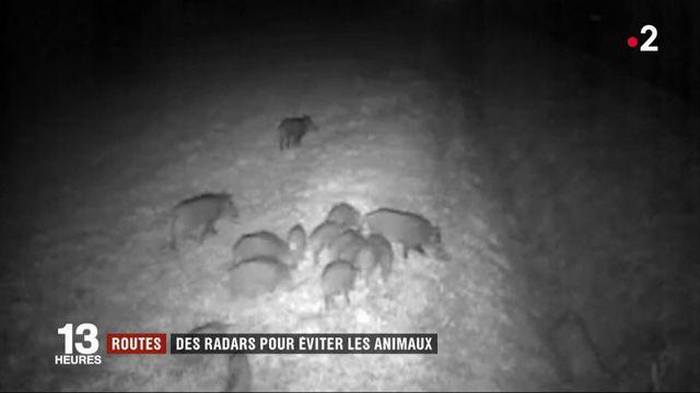 Routes : des radars pour éviter les animaux