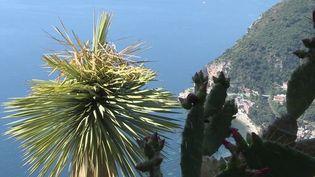 Le 12/13 vous emmène à la visite de l'un des trésors de la Côte-d'Azur : le jardin botanique d'Èze et son panorama exceptionnel. (France 3)