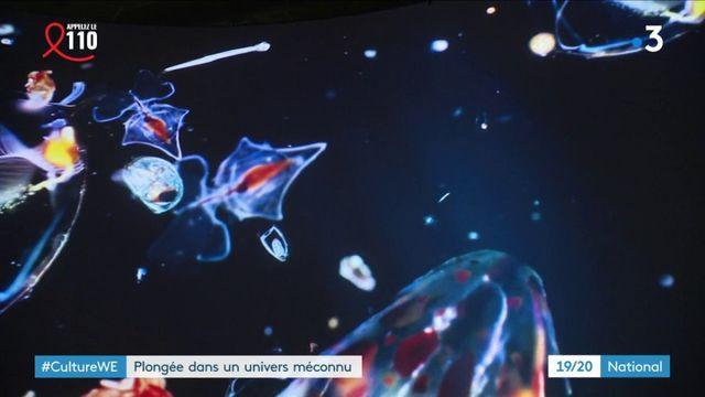 Culture : plongée dans l'univers méconnu des océans