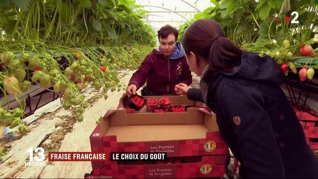 Fraise française : le choix du goût