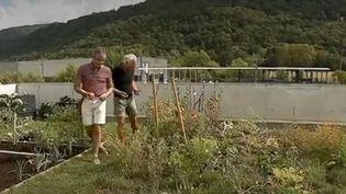 De plus en plus de personnes se mettent à cultiver des légumes sur les toits pour obtenir son potager même sans disposer d'un jardin. (FRANCE 3)