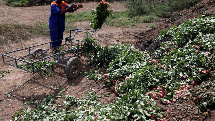 Dans la ferme horticole de Maridadi à Naivasha, au Kenya, des employés jettent des tonnes de roses qui ne peuvent plus être exportées vers l'Europe en raison de la pandémie de coronavirus. (BAZ RATNER / REUTERS)
