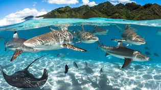 Moorea, Polynésie française.  (Grégory Lecoeur )