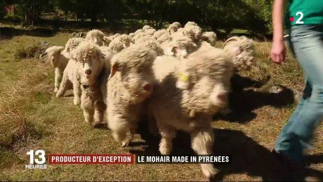 La laine mohair des Pyrénées, un produit local d'exception