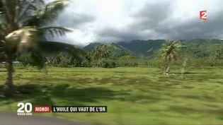Le monoï vient de Polynésie (France 2)