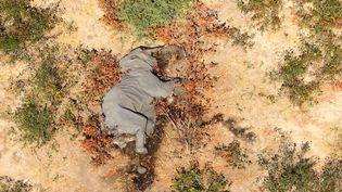 La carcasse d'un des éléphants morts dans le delta de l'Okavango. (AFP / NATIONAL PARK RESCUE)