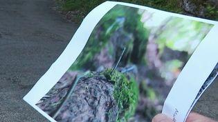 Haute-Savoie : des clous retrouvés sur des chemins de randonnée. (FRANCE 3)