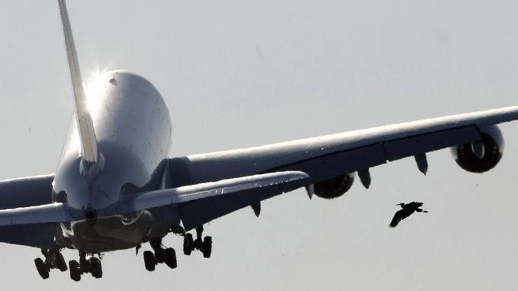 Un Airbus A380 Air France-KLM décolle près de Hambourg (Allemagne), le 30 octobre 2009. (CHRISTIAN CHARISIUS / REUTERS)