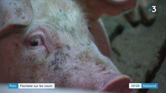 Porc : flambée sur les cours