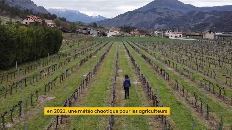Une exploitation de vigne en France. (franceinfo)