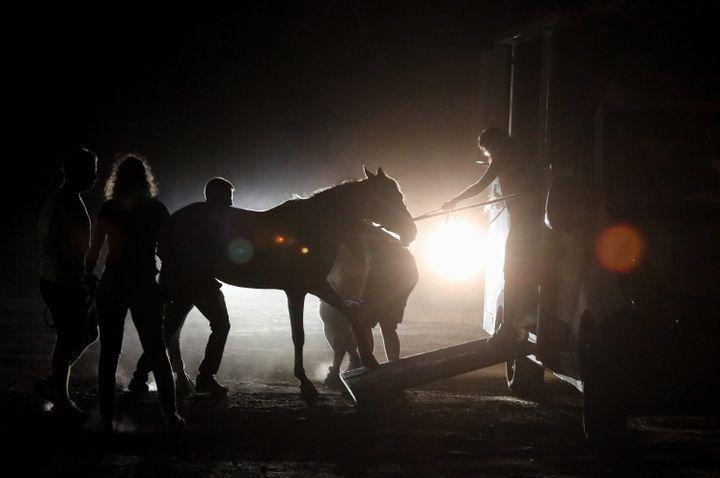 Des chevaux sont évacués près du Luc (Var), dans la nuit de lundi à mardi 17 août. (JEAN FRAN?OIS OTTONELLO / MAXPPP)