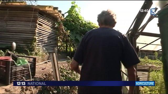 Sécheresse : dans toute la France, les agriculteurs s'inquiètent