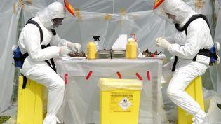 Des chercheurs isolent des échantillons sur des animaux qui pourraient être contaminés par le virus Ebola, dans un laboratoire de brousse, au Gabon. (CHRISTOPHE LEPETIT / ONLYWORLD.NE / AFP)