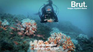 VIDEO. Ces plongeurs se battent pour sauver un récif corallien (BRUT)