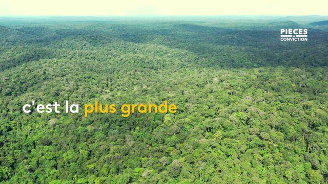 L'Amazonie française s'étale sur 8 millions d'hectares, mais l'activité minière a détruit la forêt et laissé place à la pollution