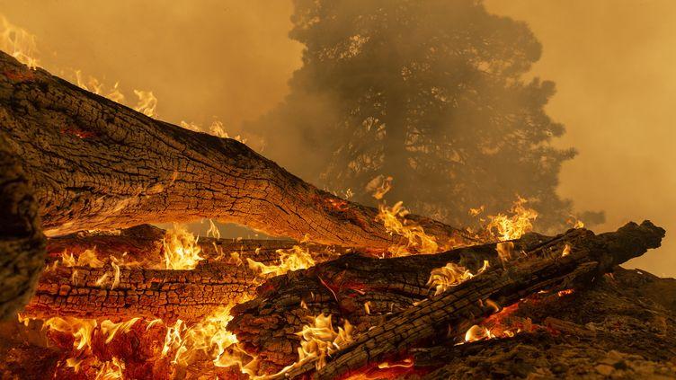 Des arbres brûlent au nord de Monrovia, en Califonie (Etats-Unis), le 10 septembre 2020. (DAVID MCNEW / GETTY IMAGES NORTH AMERICA)