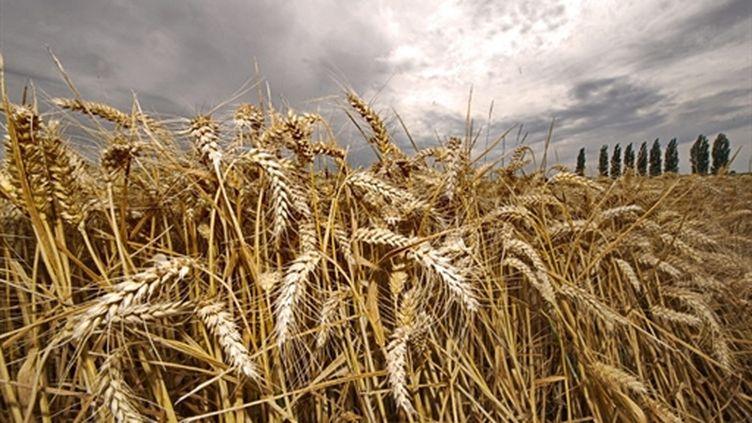 Les derniers mois ont vu forte hausse des cours du blé, du maïs, du sucre, des huiles alimentaires et du riz. (AFP PHOTO / PHILIPPE HUGUEN)