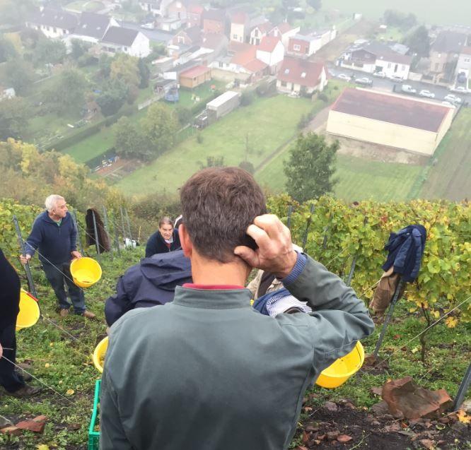 Des passionnés cultivent déjà de la vigne sur les flancs d'un terril d'Haillicourt (Pas-de-Calais). (O. PUCEK / DR)