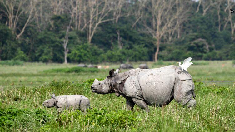 Un rhinocéros adulte et son petit dans une réserve en Inde. (BIJU BORO / AFP)