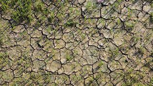 Le sol craquelé à cause de la sécheresse. Photo d'illustration (GILLES TARGAT / AFP)