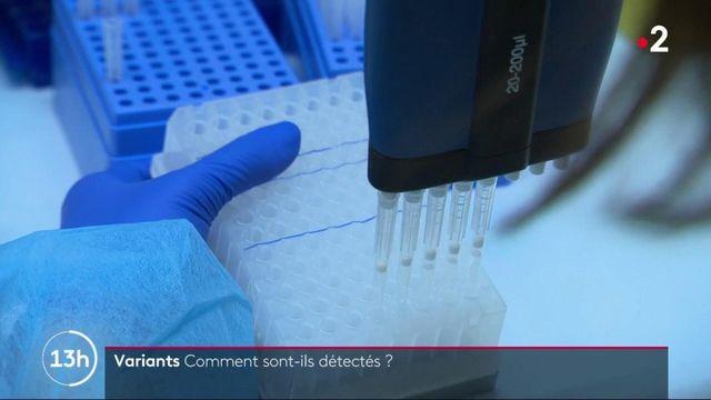 Covid-19 : comment les variants sont-ils détectés et séquencés ?