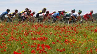 Le peloton du Tour d'Italie, le 17 mai 2021 lors de la 10e étape entre l'Aquila et Foligno. (LUCA BETTINI / AFP)