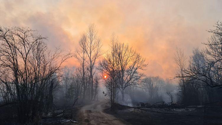La forêt brûle aux alentours de l'ancienne centrale nucléaire de Tchernobyl, en Ukraine, le 5 avril 2020. (YAROSLAV EMELIANENKO / AFP)