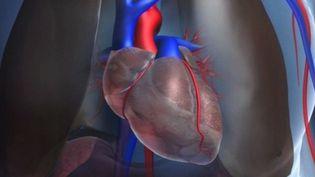 Bientôt un coeur humain fabriqué avec une imprimante 3D ?