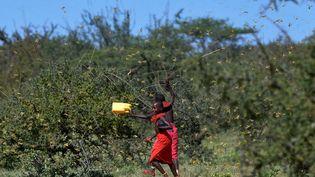Des jeunes filles au milieu des criquets, au Kenya, le 21 janvier 2020. (TONY KARUMBA / AFP)
