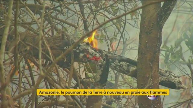 Amazonie : le poumon de la terre encore en proie aux incendies