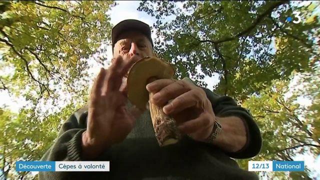 Dordogne : la saison des cèpes est lancée