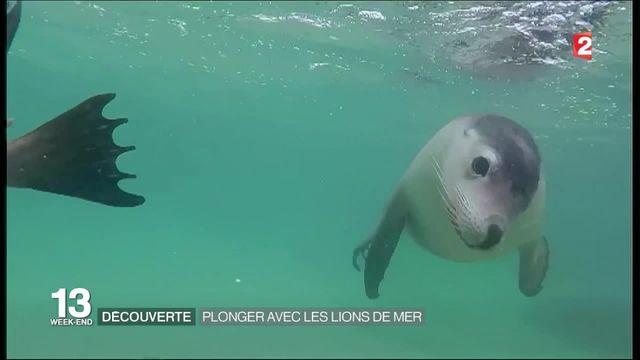 Découverte : plonger avec les lions de mer